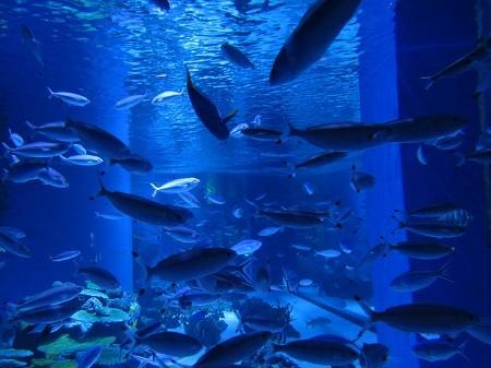 受講者様の写真「水族館写真撮影講座@品川」