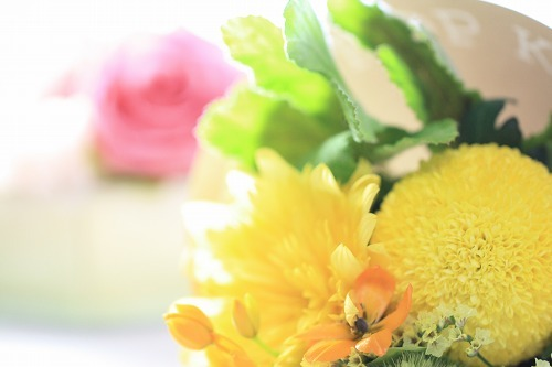 お花撮影の個人レッスン、1回でこんなにきれいな写真が♪