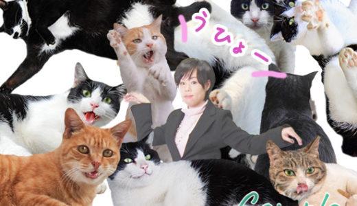 [ボシュー]4月1日 猫サイズになって猫まみれになるカメラ教室