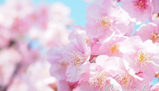 [受講者様の写真]木場の河津桜、聖蹟桜ヶ丘の桜写真カメラ教室2019