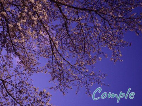 夜桜カメラ教室