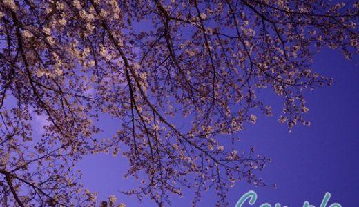 [レポ・受講者様の写真]夜桜写真カメラ教室 東京立川昭和記念公園