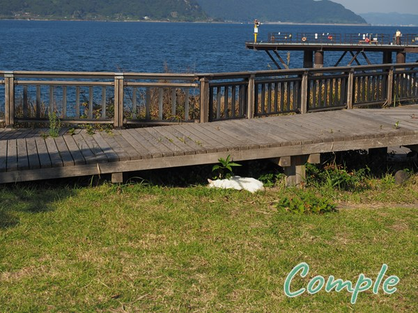 桜島溶岩なぎさ公園の猫