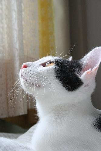 猫写真撮影の個人レッスンカメラ教室やっています