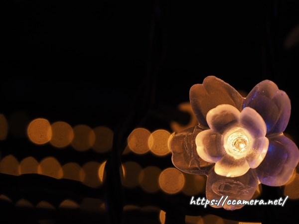 大井競馬場メガイルミ桜