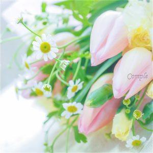 露出補正プラスの花