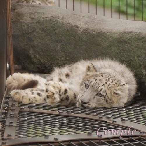 [レポ]北海道旭川 旭山動物園写真カメラ教室