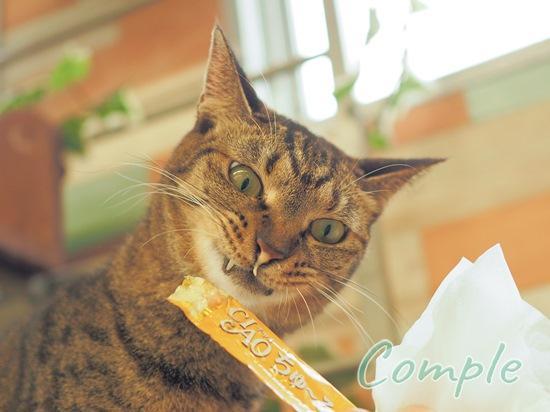 チャオちゅーる猫