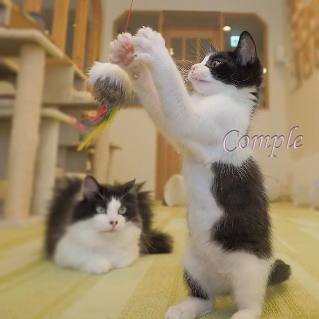 [終了]2月23日 猫写真をかわいく撮るカメラ教室@横浜保護猫カフェ