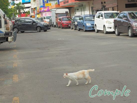 マレーシアの猫