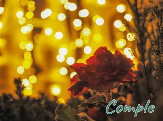 花と玉ボケ夜景