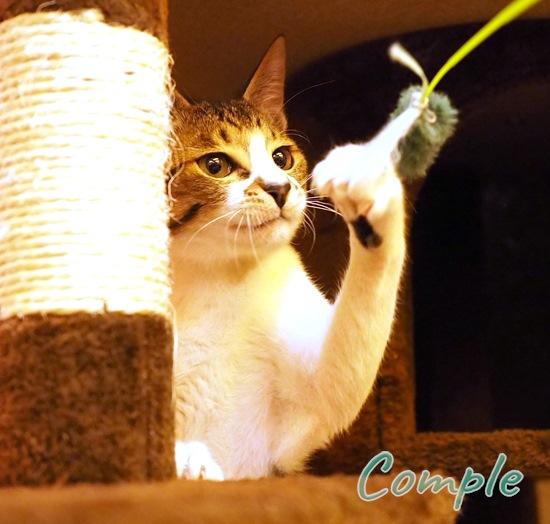 ガッツポーズ猫