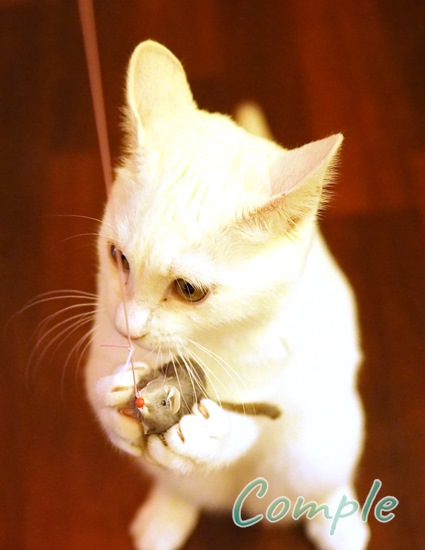 白猫とネズミ