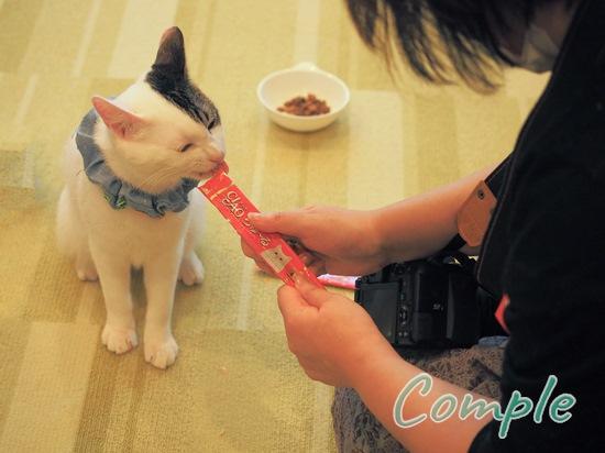 猫写真カメラ教室