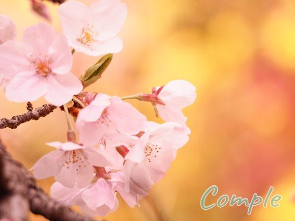 桜黄色バック