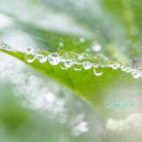 葉っぱ水滴マクロ