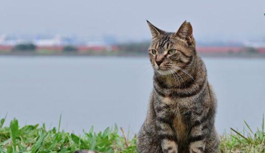 [レポ]橋の工事と猫と飛行機写真カメラ教室@羽田川崎