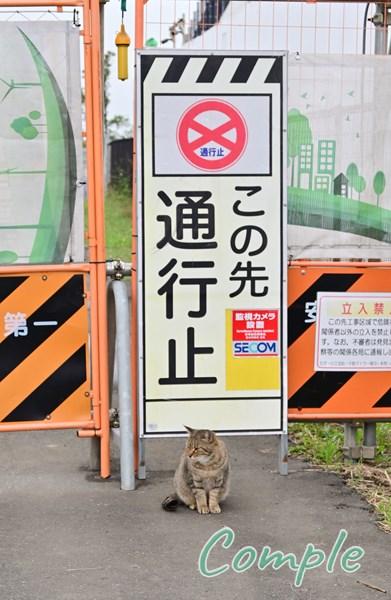 通行止め猫