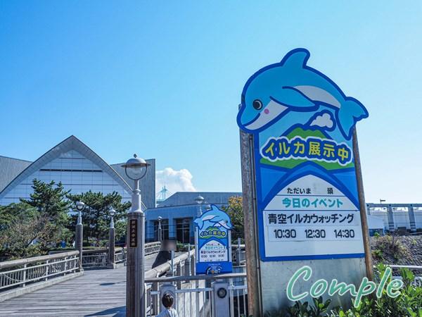 いおワールドかごしま水族館青空イルカウォッチング