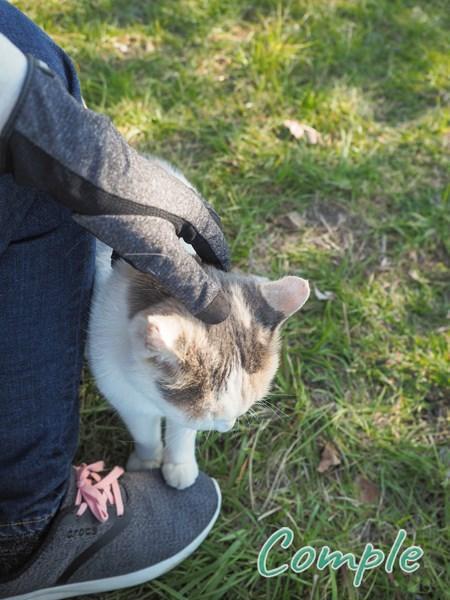 脚に乗る猫