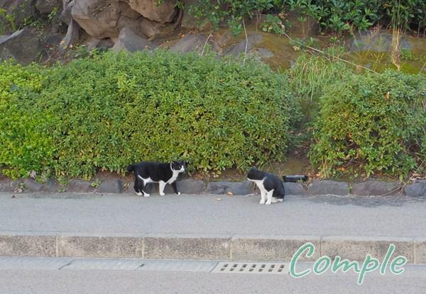 白黒猫2匹