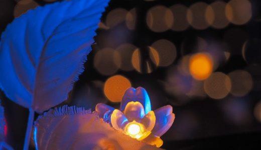 [レポ・受講者様の写真]大井競馬場の夕景・イルミネーション夜景写真カメラ教室2019